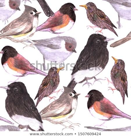 Wild birds seamless background watercolor medium Stock photo © shawlinmohd