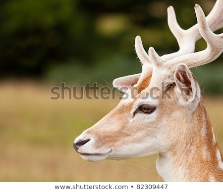 Young deer in summer forest Stock photo © Alex9500