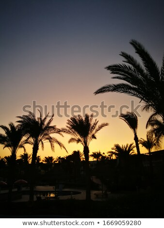 Darkened palm trees with a sunny sunset on the back Stock photo © ElenaBatkova