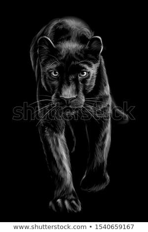 Portre siyah puma bebek hayvanat bahçesi göz Stok fotoğraf © olira