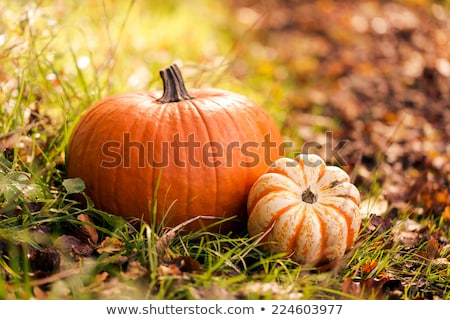 close up of pumpkin, acorns and autumn leaves Stock photo © dolgachov