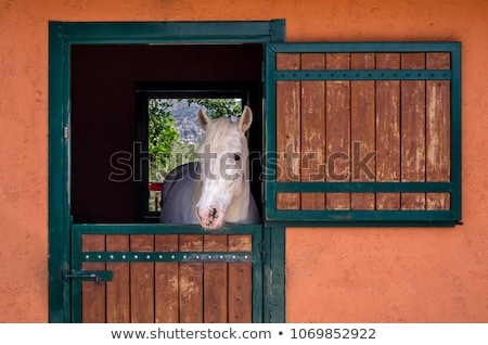 Farm stable with horse Stock photo © jossdiim