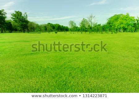 Abstract estate campo in erba cielo ampia sfondo Foto d'archivio © karandaev