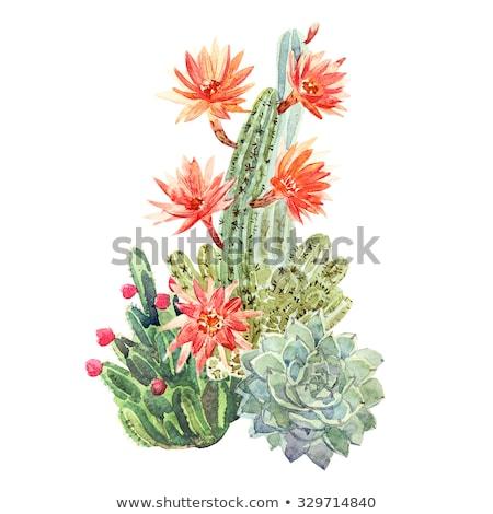 çiçekler kaktüs mavi gökyüzü gökyüzü çiçek Stok fotoğraf © Musat