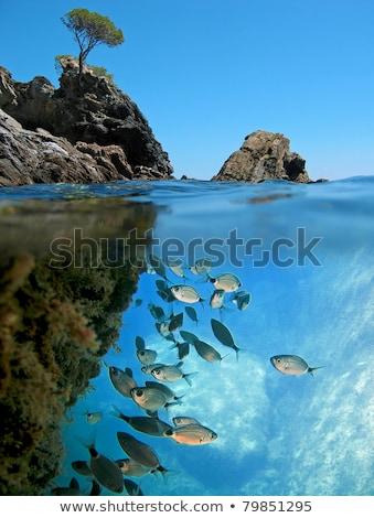 iskola · hal · víz · étel · nyár · narancs - stock fotó © lunamarina