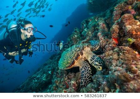 スキューバダイビング 女性 ぬれた スーツ マスク ストックフォト © piedmontphoto
