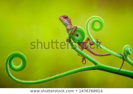 Trópusi gekkó zöld levelek háttér fej állat Stock fotó © AlessandroZocc