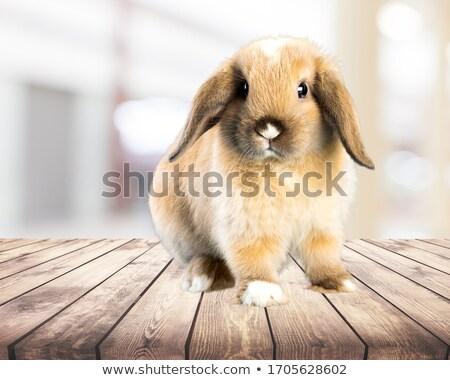 赤ちゃん バニー 月 古い ウサギ ストックフォト © nailiaschwarz