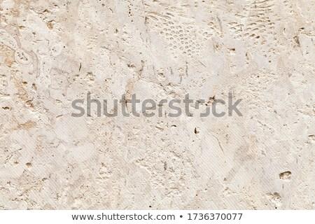 Shell kalksteen muur textuur achtergrond rock Stockfoto © Leonardi