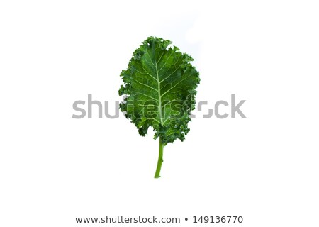 Fresh kale leaves Stock photo © Melpomene