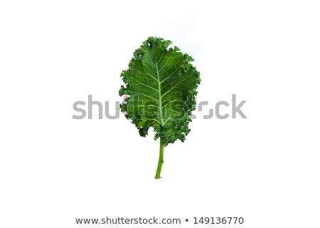 bitki · bahçe · yeşil · yaprakları · organik - stok fotoğraf © melpomene