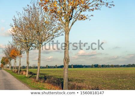 Desfolhada árvore estrada secar corrida deserto Foto stock © jkraft5