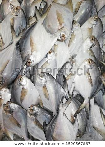 Balık ıslak pazar satış Filipinler Stok fotoğraf © mtkang