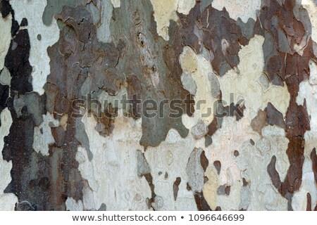 Vliegtuig boom schors textuur bos natuur Stockfoto © hraska