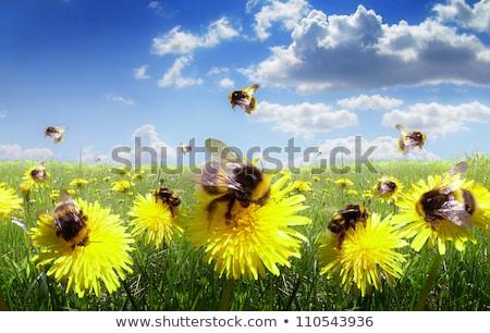 Méh gyűlés nektár virág háttér gyógyszer Stock fotó © prg0383