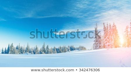 blue sky background with christmas fir   vintage retro style stock photo © mikko