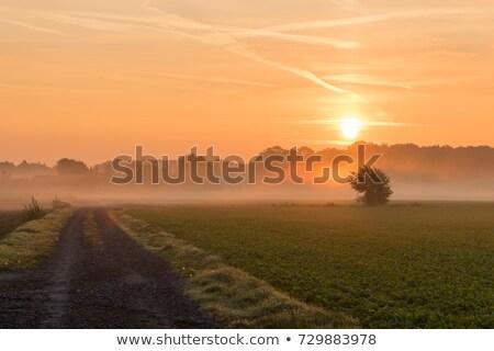 Zöld mező gyönyörű napsütés égbolt étel Stock fotó © meinzahn