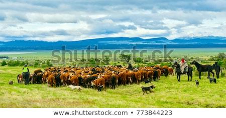 коров пастбище группа промышленности фермы Сток-фото © xura