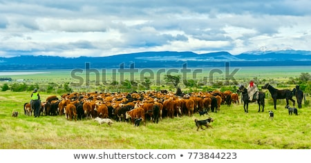Rebanho vacas grupo indústria fazenda Foto stock © xura