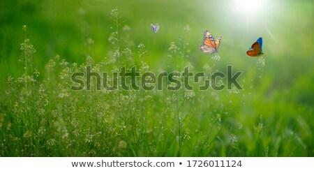 szalag · absztrakt · legelő · fű · vektor · vízszintes - stock fotó © olgaaltunina