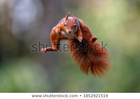 Boldog mókus rajzolt állat Stock fotó © derocz