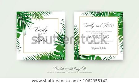 feuilles · de · palmier · photos · résumé · floral · frontière · belle - photo stock © mikko