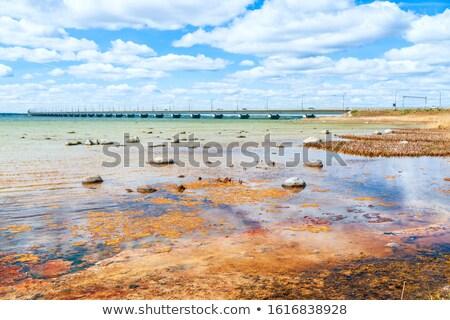 brug · voorjaar · paardebloemen · afbeelding - stockfoto © olandsfokus
