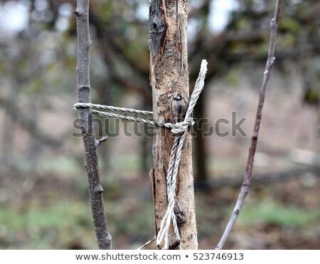 fiatal · almafa · gyümölcsös · részlet · támogatás · fa - stock fotó © sarahdoow