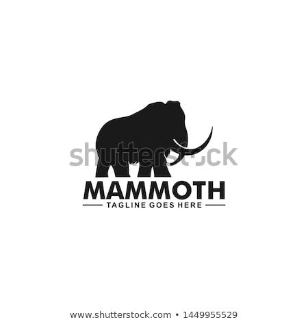 logo · projektowanie · logo · firmy · zwierząt · wektora · ilustracja - zdjęcia stock © tujuh17belas