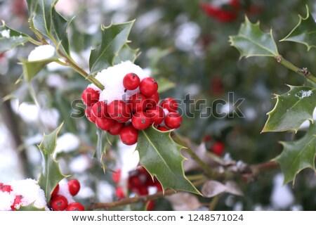 Boom Rood bessen winter gelukkig natuur Stockfoto © tilo