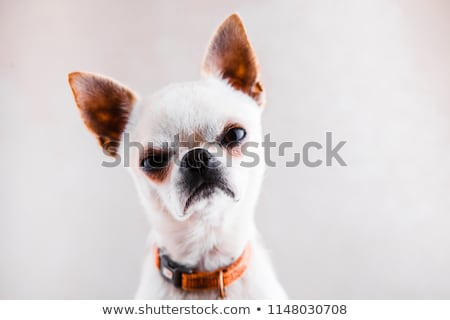 Stock photo: Angry dog