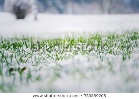 草 雪 春 緑の草 庭園 背景 ストックフォト © ultrapro