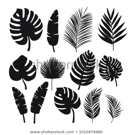 Palmblad silhouetten zwarte illustratie vector Stockfoto © derocz