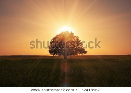 Sunrise arbre isolé rendu 3d herbe Photo stock © maxmitzu