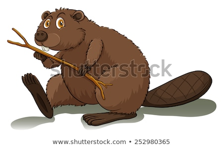 An eager beaver Stock photo © bluering