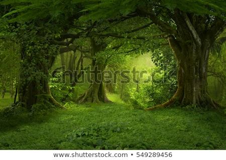 ösvény · zöld · erdő · naplemente · út · nyom - stock fotó © mady70