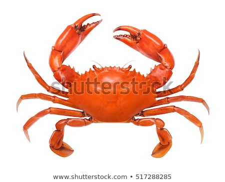 crab isolated stock photo © lightsource