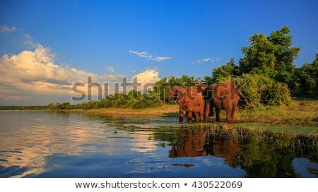 Elefántok iszik park Dél-Afrika háttér utazás Stock fotó © simoneeman