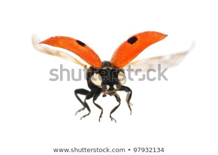 kép · katicabogár · mosoly · levél · nyár · levelek - stock fotó © bluering