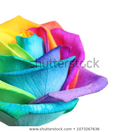 bright colorful roses stock photo © barbaraneveu