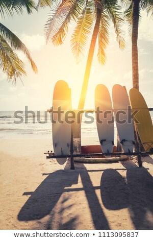 Planche de surf paradis plage palmiers mer Photo stock © orensila