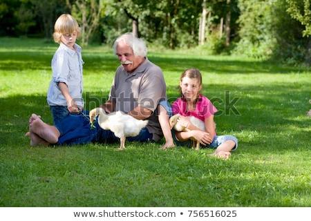 деда внучата гусей девушки природы животного Сток-фото © IS2
