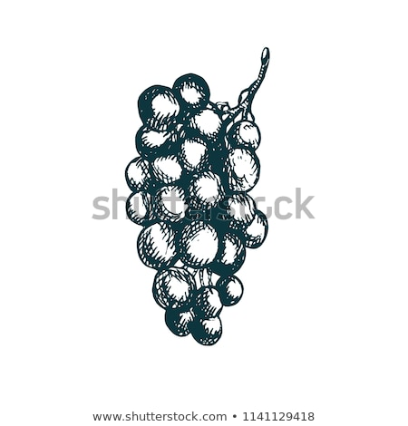 bunch of grapes hand drawn sketch icon stock photo © rastudio