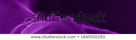 фиолетовый · градиент · семьи · лист - Сток-фото © cammep