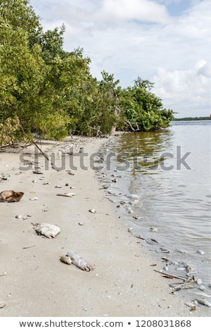 Red Tide Ocean Crisis Stock photo © Lightsource