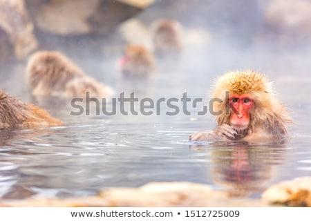 Stock fotó: Majom · fürdőkád · aranyos · tavacska · víz · természet