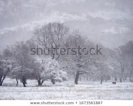 Harsh winter weather in the mountains Stock photo © Kotenko