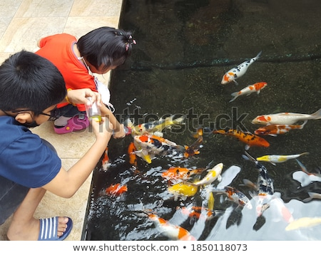 Feeding fishes from baby bottles. Koi carps Stock photo © galitskaya