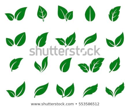 Yeşil yaprak eco ikon ev araba Stok fotoğraf © bspsupanut