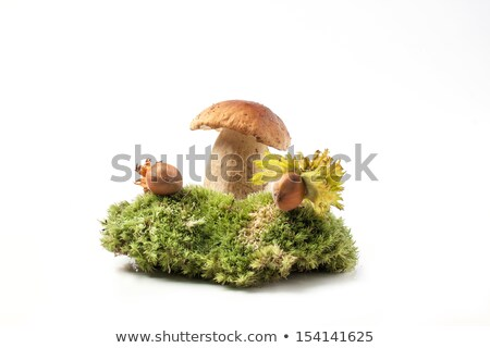 Porçini mantar yosun orman sonbahar mantar büyümek Stok fotoğraf © romvo